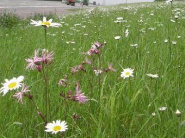 FNP: ekologysk behear provinsjale bermen