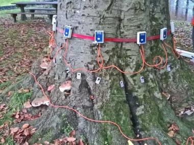 Nijsgjirrich!: De gemeente Súdwest-Fryslân heeft sinds deze week een digitale bomenkaart.