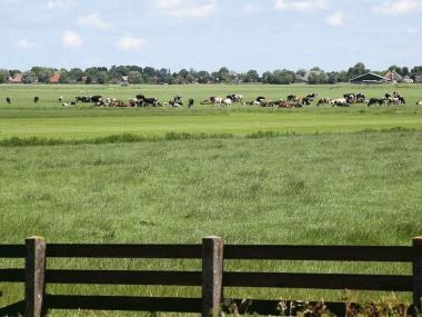 FNP Fryslan Natuer ynklusyf. friesland melkkoeien grazen weiland koeien gemaaid e m.detail