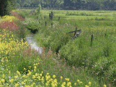 Fryslân: FNP: bioferskaat yn nij Europeesk lânboubelied